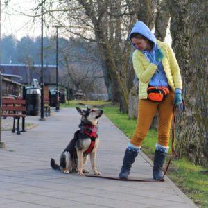 Поддаются ли взрослые собаки дрессировке?