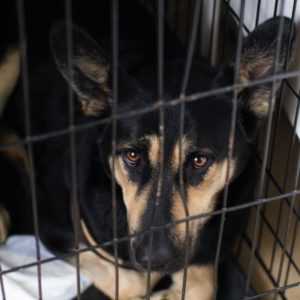 Нужна ли вам клетка для собаки?