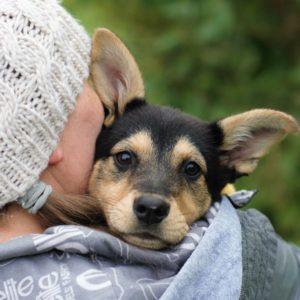 Будет ли собака счастливее у вас в доме, чем на улице или в приюте?