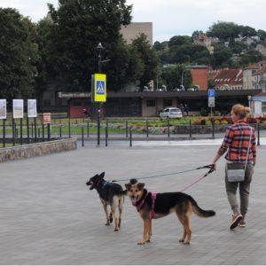 Эмиграция с собакой