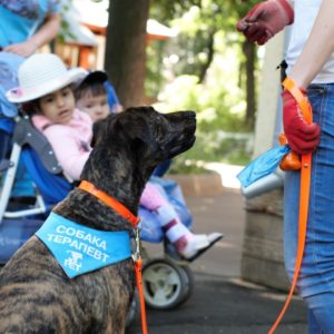 Собаки-терапевты (о проекте «Не просто собаки»)