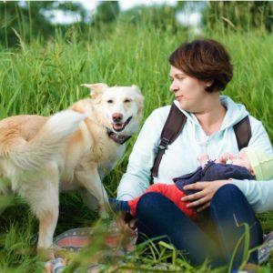 Знакомство собаки с будущими супругами и новорожденными