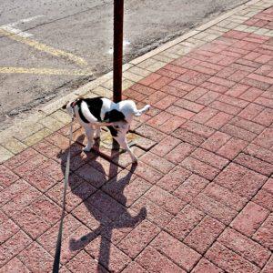 Учим собаку испражняться по команде