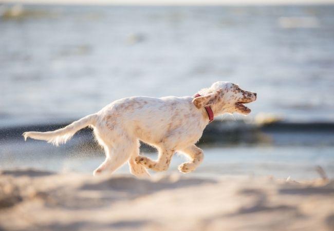 Как приучать щенка к чистоплотности?
