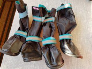 Обзор обуви для собак