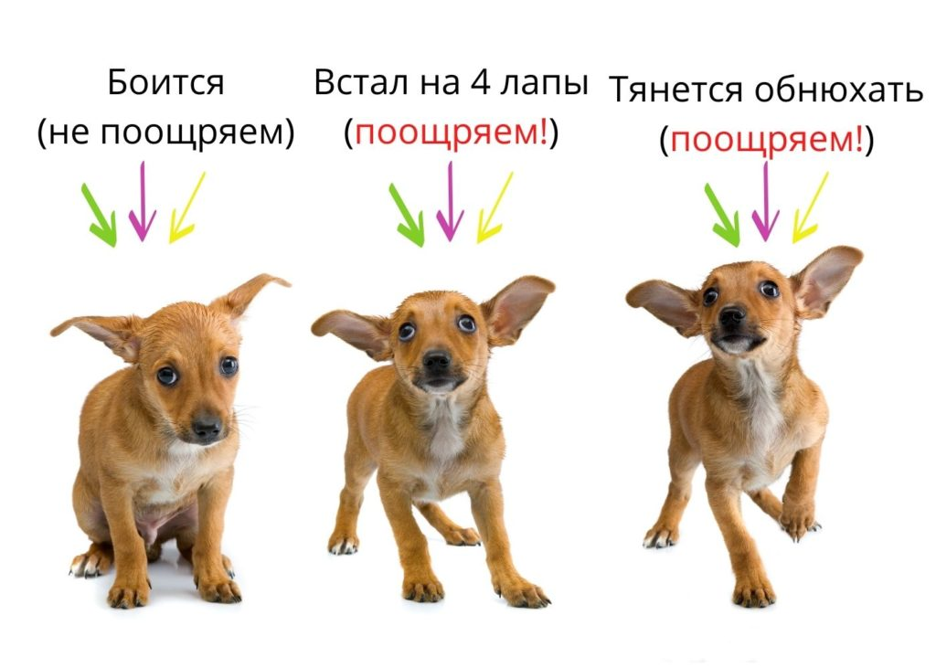 Когда и как подкреплять трусливую собаку на улице?